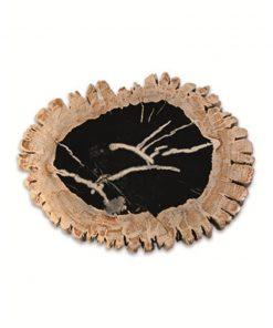 Fossiel houten schijven