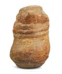 Fossiele cassave klein