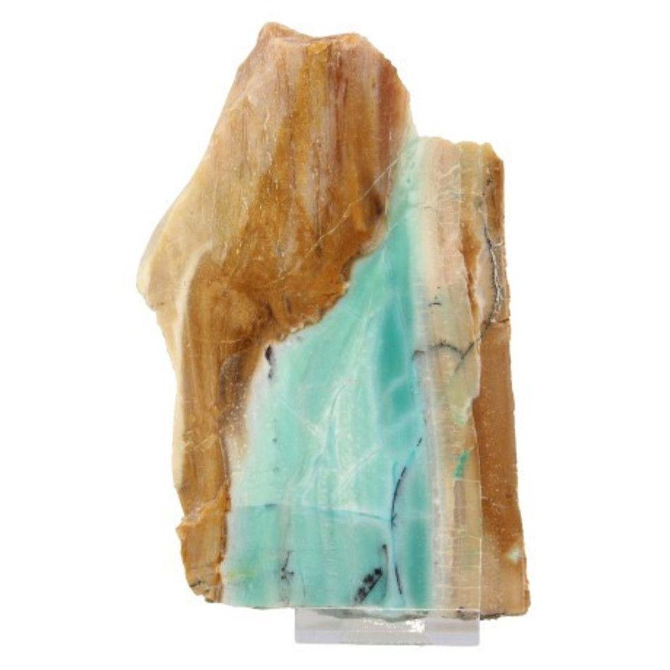 Versteend geöpaliseerd hout nr.1